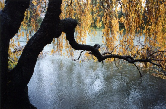 Fall becomes winter at the Brooklyn Botanic. (Photo by Jake Miller. See Who's Who)