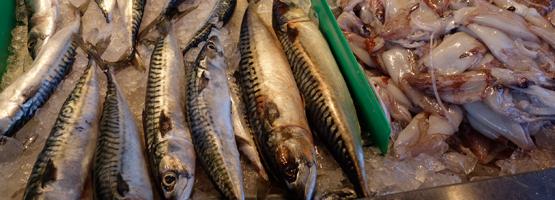 mackerel-squid-bensonhurst