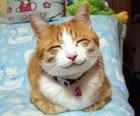 smilingCat_NYFoodTruckAssn